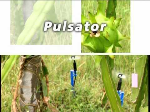 เทคโนโลยีการให้น้ำพืช