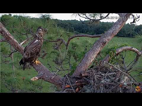 10/8/19.. Eagle Country ~ Well Hello Young One~ Not Welcomed Says Nic !