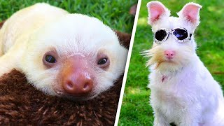 Extraordinary Albino Animals Are Defying the Odds