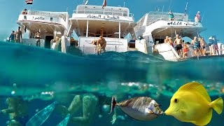 Egypt Red sea corals snorkeling. Yachts & fish in Hurghada. 4K GoPro4black