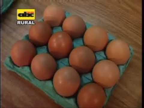 Calidad del huevo