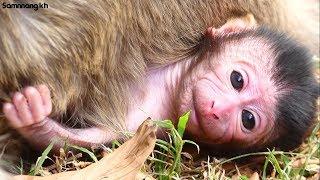 Welcome!! Newborn Baby Monkey today, baby very powerful,Samnnang kh D88