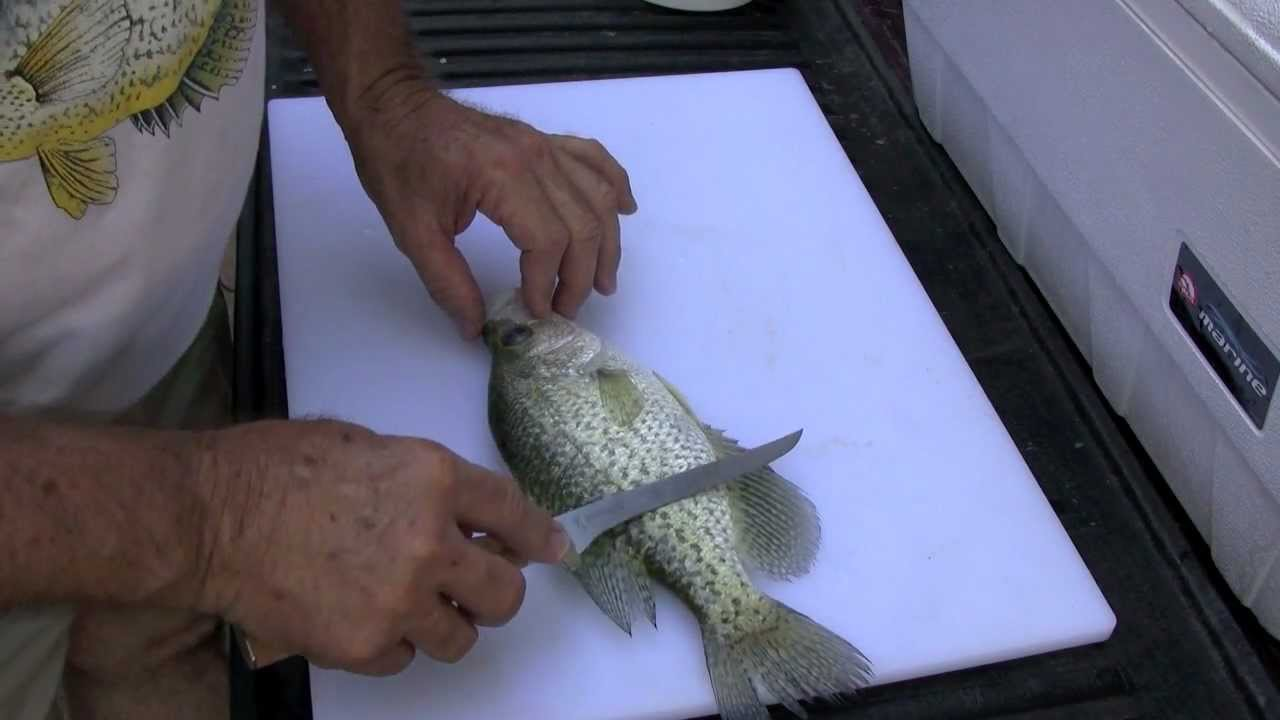 Cleaning a crappie the traditional way with browning for Fish cleaning knife
