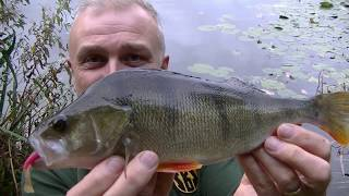 Jigging for perch  -  Blog entry 744