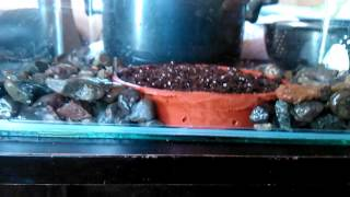 Terrario Plantas Carnivoras