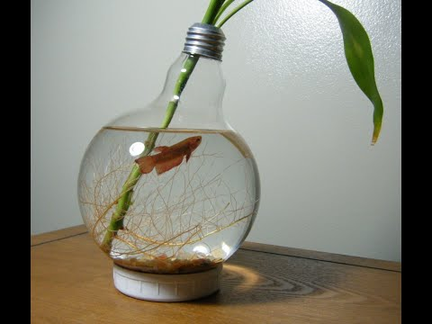 Аквариум из Лампочки /  Aquarium of the Bulb , DIY