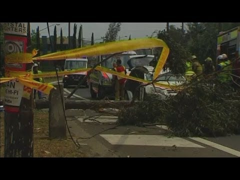 Australian storm footage: Couple trapped after tree falls on car