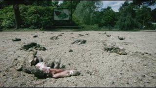 Bí ẩn kỳ lạ về 1000 con cóc tự nổ tung ở Đức