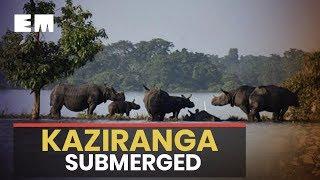Assam floods: 95% of Kaziranga submerged, 17 animals dead