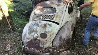 VW Beetle Oval Forest BarnFind