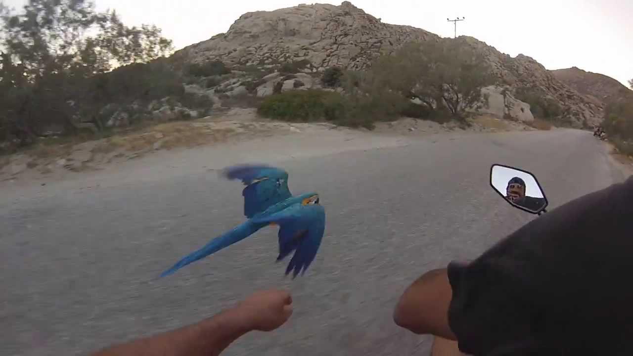 Racing my Macaw Parrot at Kolimbithres-Paros