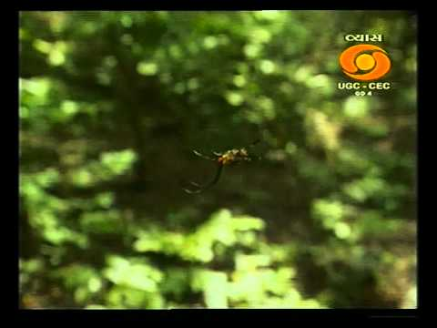 Kareem and his Puliyamkulam Forest(1204111003DVB-SNew Schedule-Segment1(00-45-46-00-57-21)).avi