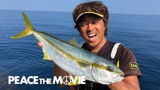 PEACE THE MOVIE「ザ・真夏の日本海!ヒラマサ釣りだ―!」山陰地方・鳥取県鳥取市の旅  (前編)/平和卓也(864)