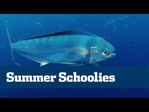 Summertime Schoolies