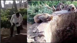 Đàn khỉ vây quanh thành giếng, người dân sợ hãi khi thấy 'vua núi rừng' bị mắc kẹt bên dưới