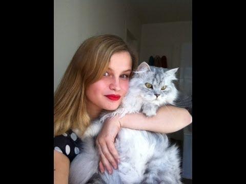 A savoir : Avant d'adopter un chat.