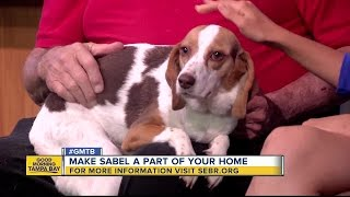 May 27 Rescue in Action: Say hi to Sable