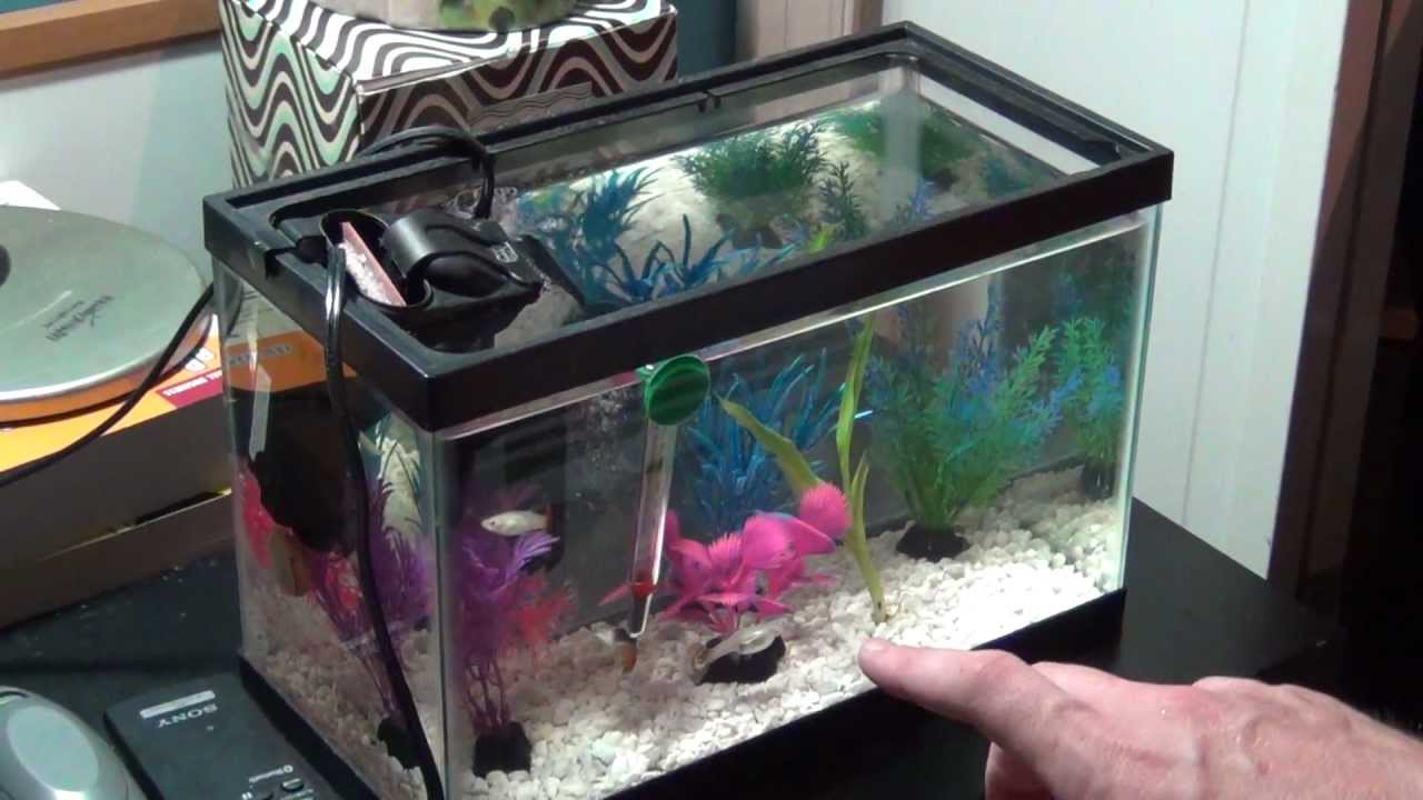 Pets fish aquariums with guppies live aquatic plants tips for Outdoor fish tank for sale
