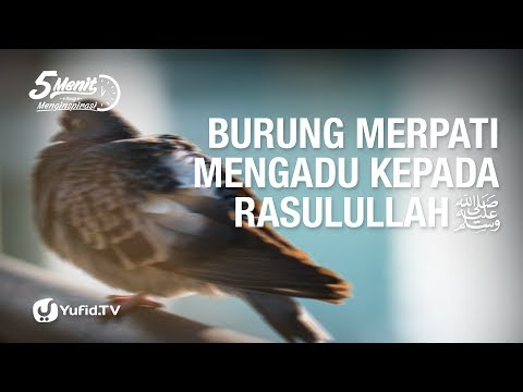 Burung Merpati Mengadu Kepada Rasulullah - Lima Menit Yang Menginspirasi