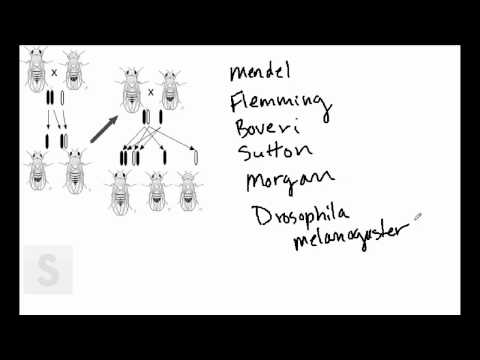 "Saylor.org BIO305: Lynn Carpenter's ""Chromosome History"""