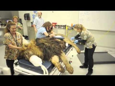 News News american equine dentistry schools