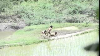 Hmong Kids caught on cam, ເດ້ກນ້ອຍຫລີ້ນຂີ້ຕົມ, Kuv yog Hmoob