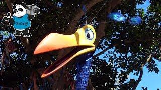 Kevin - Bird from UP Movie - Animal Kingdom NEW Walk Around Character - Walt Disney World
