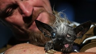 "Meet the ""world's ugliest dog"""