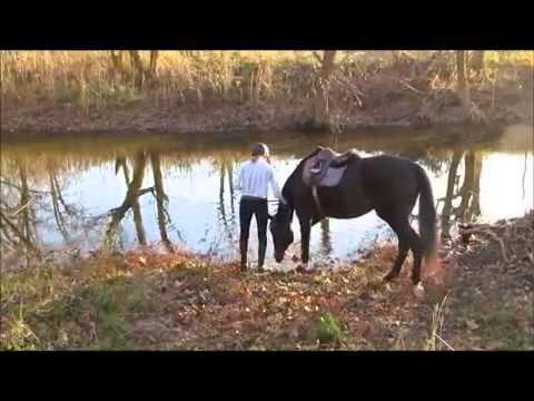 Cavalo vingativo