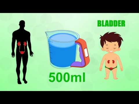 Learn about Human Body Parts For Kids - BLADDER