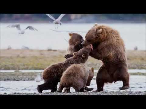 Alaska Adventure Eco-Tourism Cruises | m/y SINGLE STAR