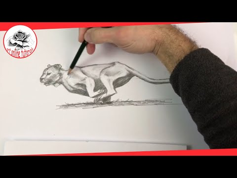 How to Draw a Lioness Step by Step | Pencil Drawing Technique