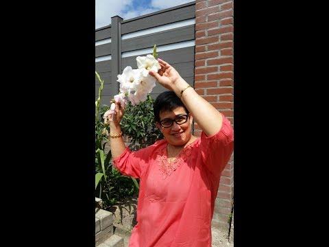 Rani Chania ~ Setangkai Bunga Padi