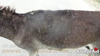 Abused donkey burned by hot water left to die rescued