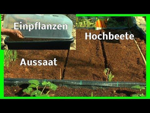 Hochbeete Aussaat Möhren und Zwiebeln stecken Tomaten einpflanzen Sommerblumen Aussaat im Garten