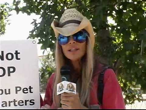 Adopt don't shop Dogs from Puppy Mills and the Internet Video