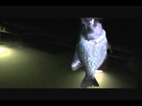 Fall night light crappie fishing how to save money and for Crappie fishing at night