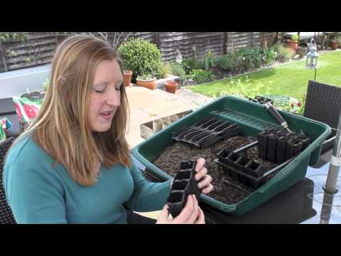 Gardening Tips: Sowing Sweet Peas