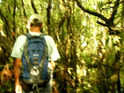 Florida Trail: Lafayette Creek Hike on Nokuse