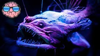 Top 10 CREEPY Deep Sea Creatures You Didn't Know Existed!