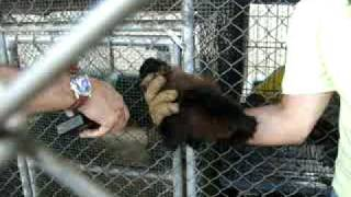 Buying Monkeys in the Dominican Republic...