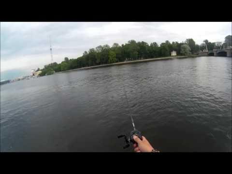 ловля судака на реке нева
