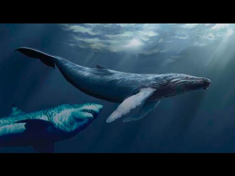 MEGALODON SHARK PROOF AND EVIDENCE!? REAL MEGALODON 2014 - YouTube