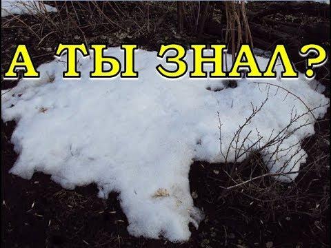 Подкормки сада по снегу – вопросы и ответы