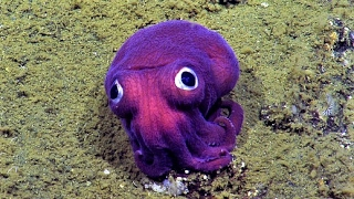 14 Strange Things Found Underwater