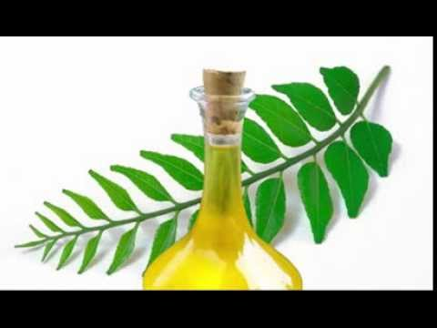 Curry Leaf Oil Benefits