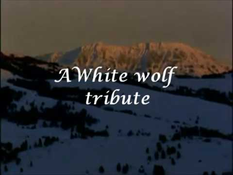 Arctic wolf - White wolf - Tribute Video