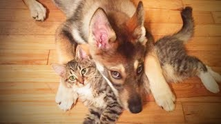 Cute Cats and Dogs 😻🐶 Cats and Dogs Friendship (Full) [Funny Pets]