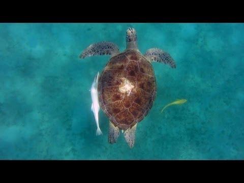 Underwater Waterproof Camera Case Review