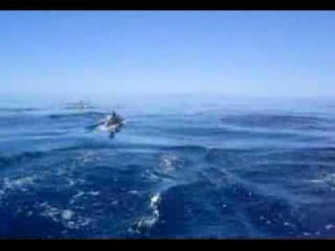 Delfines en La Paz BCS Video